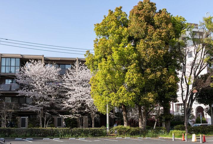 2021年桜満開