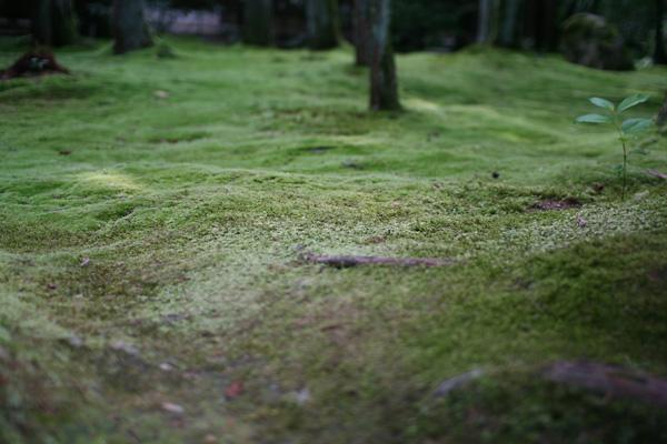 龍安寺の苔